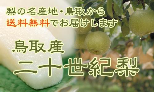 鳥取県産進物用梨全国発送受付中